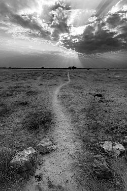 Animal track leading to a waterhole, Khama Rhino Sanctuary, Serowe, Botswana  -  Vincent Grafhorst