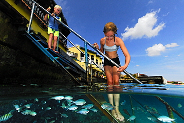 Boy and girl feeding fish from submerged staircase, Bonaire, Netherlands Antilles  -  Hans Leijnse/ NiS