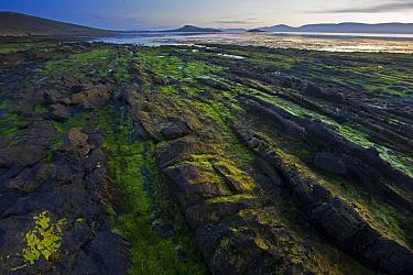 Rocky coast, Carcass Island, Falkland Islands  -  Heike Odermatt