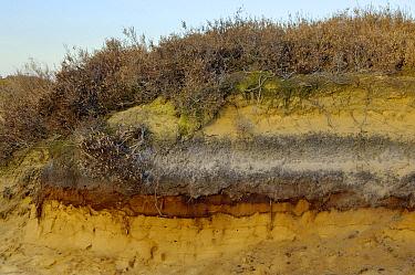 Soil in peat bog showing stratification, Appelscha, Friesland, Netherlands  -  Philip Friskorn/ NiS