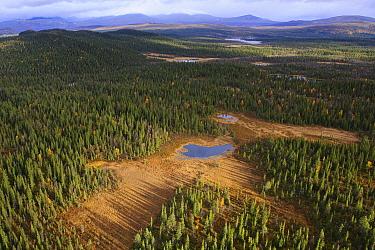 Boreal forest and ponds, Sarek National Park, Sarek National Park, Laponia, Sweden  -  Sven Zacek/ NiS