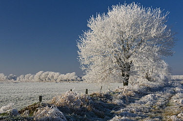 Ice-covered trees in winter landscape, Goldenstedter Moor, Lower Saxony, Germany  -  Willi Rolfes/ NIS