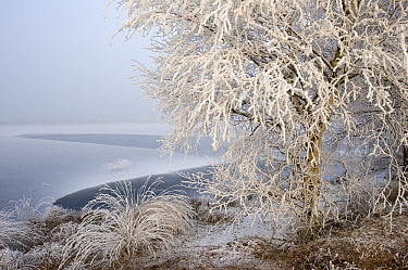 Bog in the winter, Goldenstedter Moor, Lower Saxony, Germany  -  Willi Rolfes/ NIS