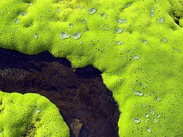 Water drops on moss, Jotunheimen, Norway  -  Melvin Redeker / Buiten-beeld