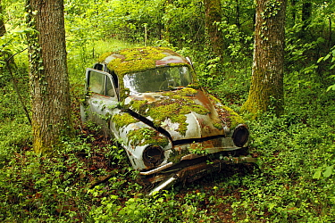 Wreck of Simca Aronde car in forest, Saint-Jory-las-Bloux, Dordogne, France  -  Silvia Reiche