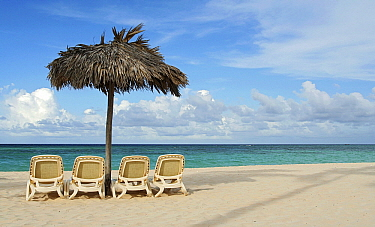 Chairs and sunshade for tourists on beach, Punta Cana, La Altagracia, Dominican Republic  -  Bart van Dinten/ NiS