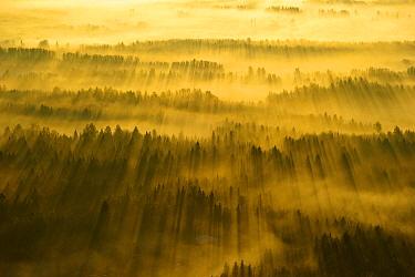 Sunrise over forest, Tartumaa, Estonia  -  Sven Zacek/ NiS