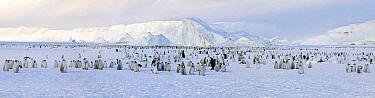 Emperor Penguin (Aptenodytes forsteri) colony, Cape Washington, Antarctica  -  Jan Vermeer