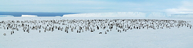 Emperor Penguin (Aptenodytes forsteri) colony, Riiser-Larsen Ice Shelf, Antarctica  -  Jan Vermeer