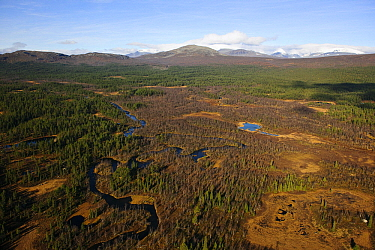 Mountains and forest, Sarek National Park, Laponia, Sweden  -  Sven Zacek/ NiS