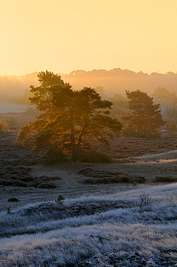 Hulshorsterzand Nature Reserve in wintertime, Hulsthorst, Gelderland, Netherlands  -  Jan Vermeer