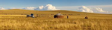 Mongolian steppe in autumn with yurt, cattle and herdman, Mongolia, China  -  Chris Stenger/ Buiten-beeld