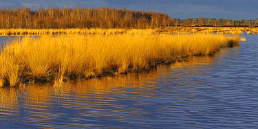 Bog in autumn, Goldenstedt, Lower Saxony, Germany  -  Willi Rolfes/ NIS