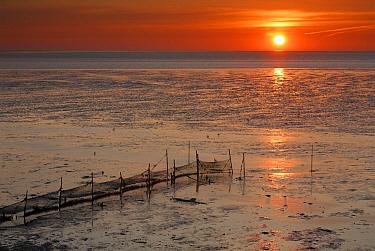 Low tide at sunset, Wadden Sea, Germany  -  Duncan Usher