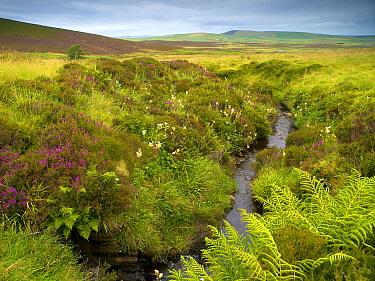 Moorland with ferns, Orkney Islands, Scotland, United Kingdom  -  Melvin Redeker / Buiten-beeld