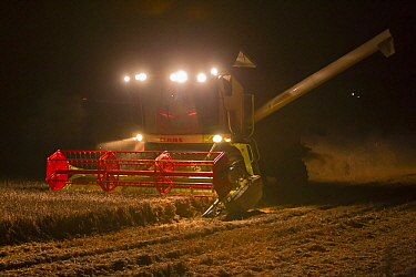 Maize (Zea mays) crop being harvested by combine  -  Duncan Usher