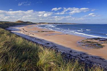Embleton Beach from Dunston Steads, Embleton Bay, Northumberland, England  -  Duncan Usher