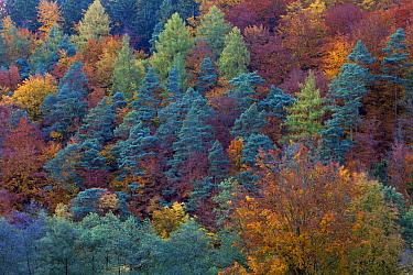 Autumn forest  -  Duncan Usher