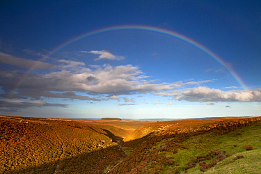 Rainbow over moorland at Wapweasel Burn and valley, Allendale, Northumberland, England  -  Duncan Usher