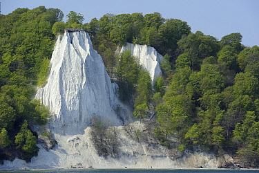 Chalk cliff and beech forest, Jasmund National Park, Jasmund, Rugen, Germany  -  Philip Friskorn/ NiS