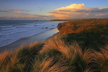 Coastal cliff, Cornwall, England, United Kingdom  -  Bart Heirweg/ Buiten-beeld