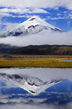 Cotopaxi Volcano seen from  Lake Limpiopungo. Cotopaxi National Park, Ecuador  -  Bart Heirweg/ Buiten-beeld