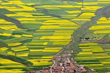 Oil Seed Rape (Brassica napus) fields and village, China  -  Chris Stenger/ Buiten-beeld