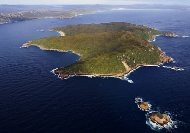 Kakapo (Strigops habroptilus) recovery efforts focus on Codfish Island, New Zealand  -  Stephen Belcher