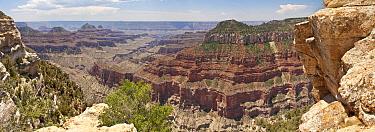 Sedimentary rock layers, Bright Angel Point, Grand Canyon, Arizona  -  Jan van Arkel/ NiS