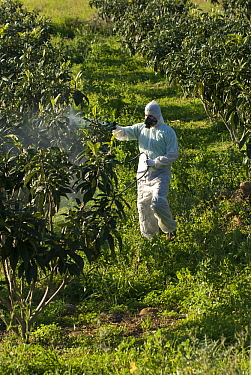 Farmer in protective clothing and face mask spraying fruit trees with chemical insecticide, Europe  -  Simon Littlejohn/ NiS