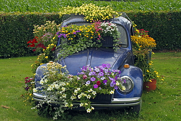 Volkswagen vehicle being used as a flower planter, Netherlands  -  Silvia Reiche