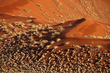 Sand dunes, Namib-Naukluft National Park, Namibia  -  Steven Ruiter/ NIS