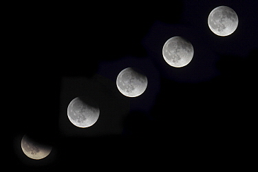 Eclipse of moon, Netherlands  -  Karin Broekhuijsen/ Buiten-beeld