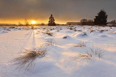 Snow covering meadow, Belgium  -  Bart Heirweg/ Buiten-beeld