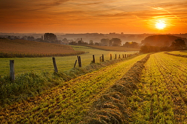 Agricultural fields at sunrise, Belgium  -  Bart Heirweg/ Buiten-beeld