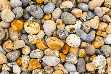 Pebbles, Audresselles, France  -  Bart Heirweg/ Buiten-beeld