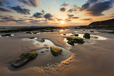 Tidepools and rocks on beach, Cap Gris Nez, France  -  Bart Heirweg/ Buiten-beeld