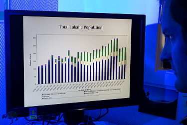 Takahe (Porphyrio mantelli) population numbers displayed in chart on computer screen, New Zealand  -  Stephen Belcher