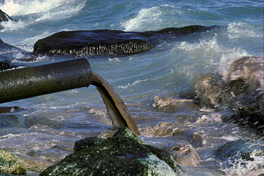 Pollution Sewage outfall, Mediterranean Sea  -  B. Borrell Casals/ FLPA
