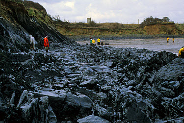 Oil Pollution, Europe Polluted rocky shore after Sea Empress disaster West Angle, Pembrokeshie, Wales  -  Celtic Pic. Library/ FLPA
