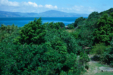 New Zealand View on Kapiti Island  -  David Hosking/ FLPA