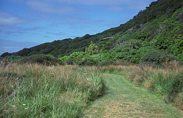 NewZealand Kapiti Island, New Zealand  -  David Hosking/ FLPA