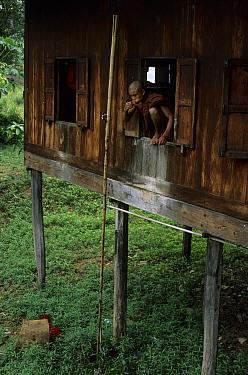 Myanmar, Monk brushing teeth outside, Thalay Pagoda, near Ywama, Lake Inle, Myanmar  -  Colin Marshall/ FLPA