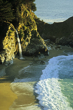 U.S.A. California, McWay Falls, only waterfall in state that flows directly into ocean, Big Sur Coast  -  Mark Newman/ FLPA
