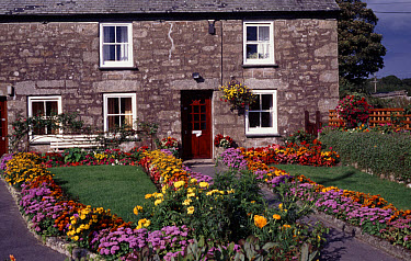 Long shot of brightly flowering front garden with stone cottage beyond, Cornwall England  -  Primrose Peacock/ FLPA