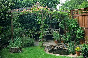 Garden pond and pergola with honeysuckle, Berkshire, England, may  -  Rosemary Mayer/ FLPA