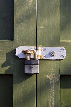 Padlock on farmyard gate, Suffolk, England  -  David Hosking/ FLPA