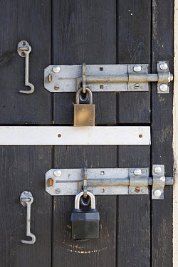 Padlocks on stable tackroom, Suffolk, England  -  David Hosking/ FLPA