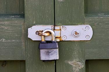 Padlock on gate, Suffolk, England  -  David Hosking/ FLPA