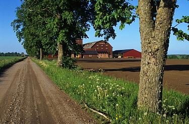 Tree lined road, farm buildings and arable farmland, Vasby, Sweden, june  -  Bjorn Ullhagen/ FLPA
